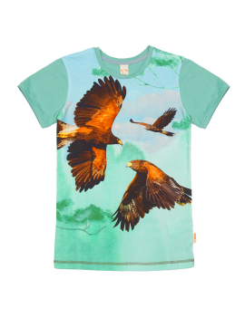Wild - Army - Hawks